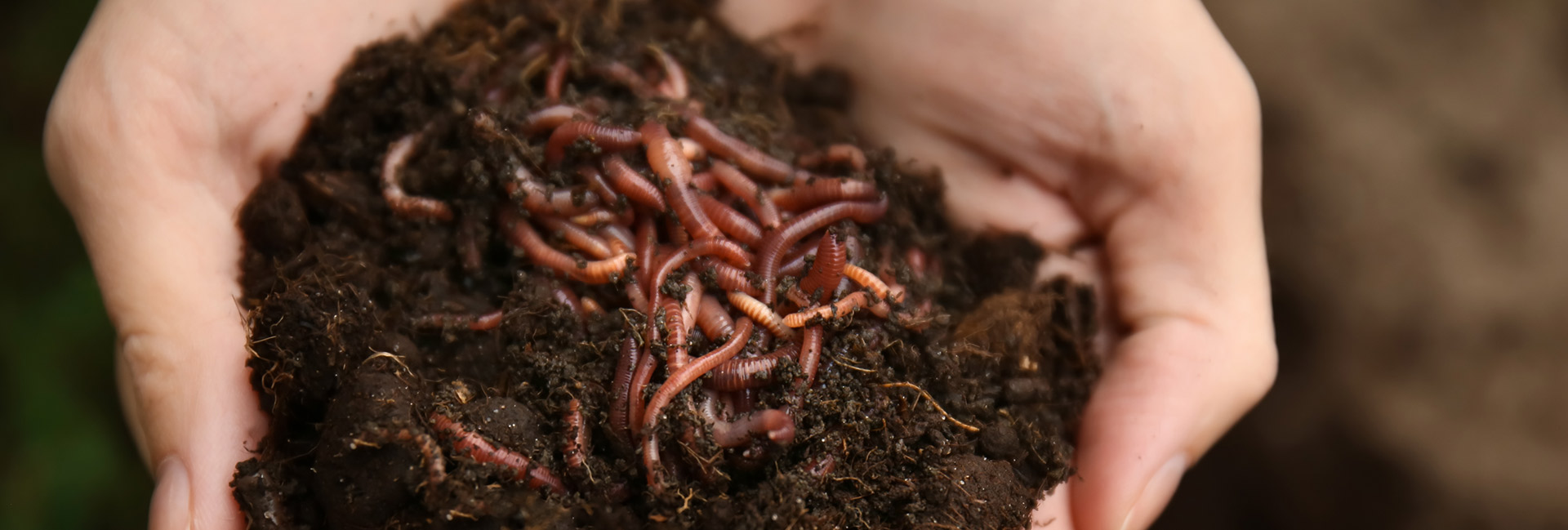 The Reality Of Vermicomposting